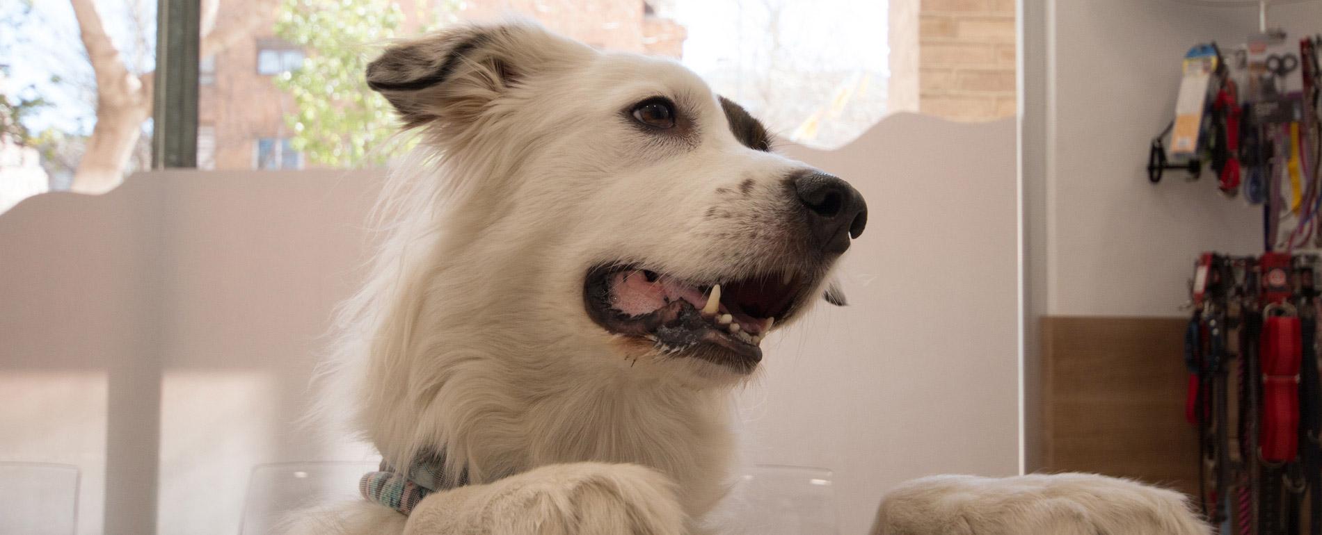 Plan geriátrico perros